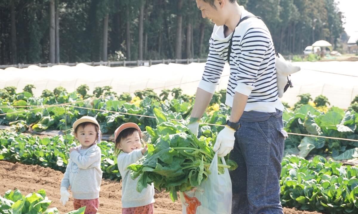 ザ・ファームの野菜収穫体験