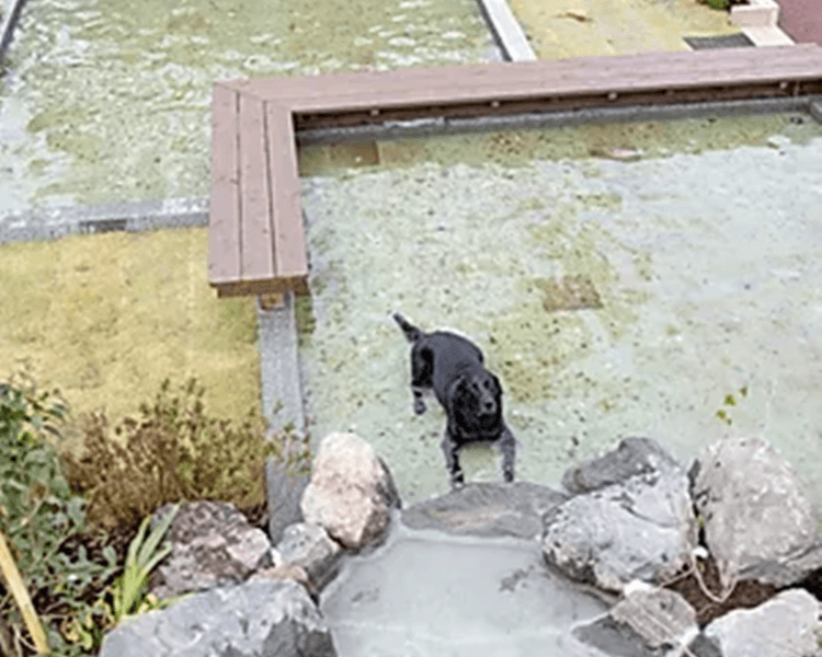 UFUFU VILLAGE | ウフフビレッジ ペットOKの水遊び場写真