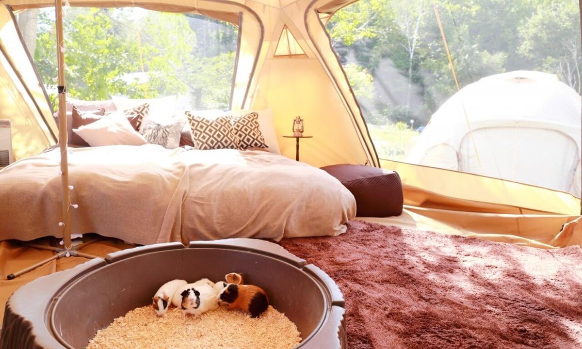 ノースサファリサッポロ・アニマルグランピングのテント客室