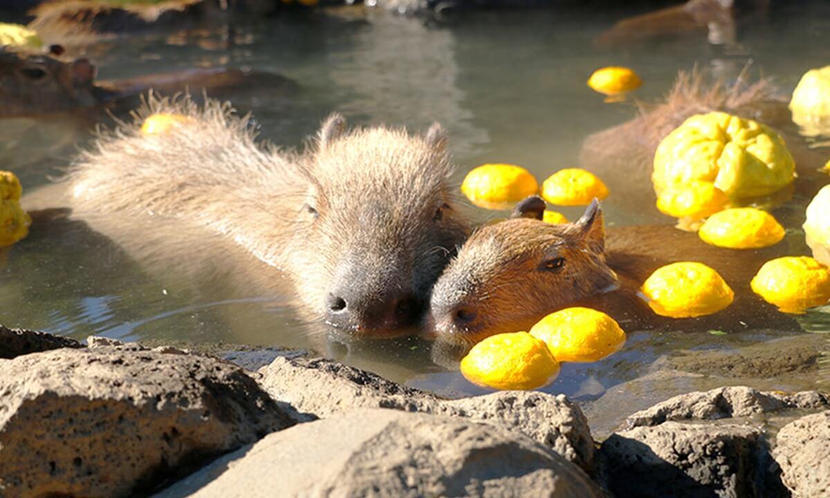 伊豆シャボテンヴィレッジ 伊豆シャボテン動物公園写真